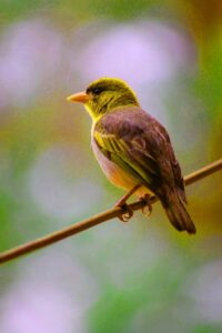 baby bird pic
