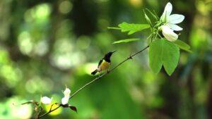beautifull bird