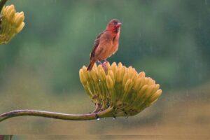 best bird wallpaper