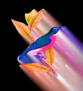 flying bird pic