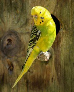 free bird wallpaper
