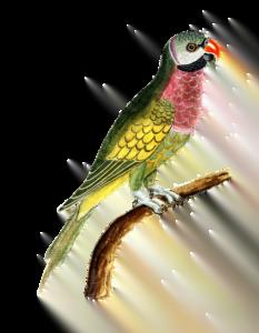 parrot bird wallpaper hd