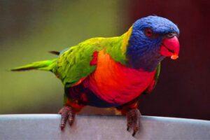 parrot birds wallpaper