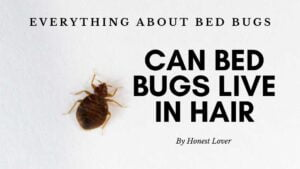 Can Bed Bugs Live in Hair